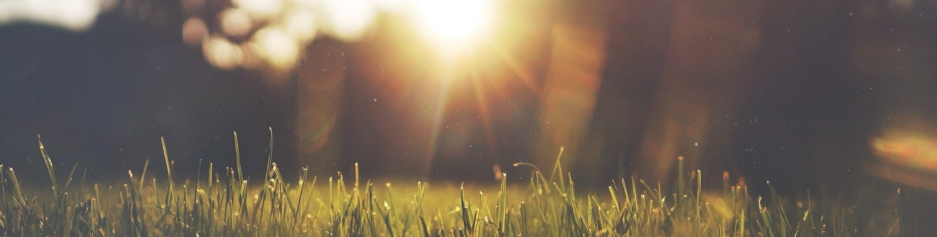 Afternoon sunshine over grass