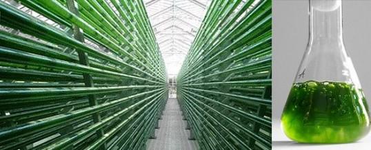 "Peak Health FAQ: ""How is BioSuperfood 'Earth's most efficient food'?"""