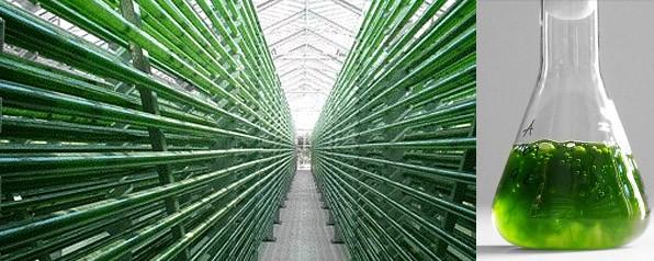 algae_bioreactor