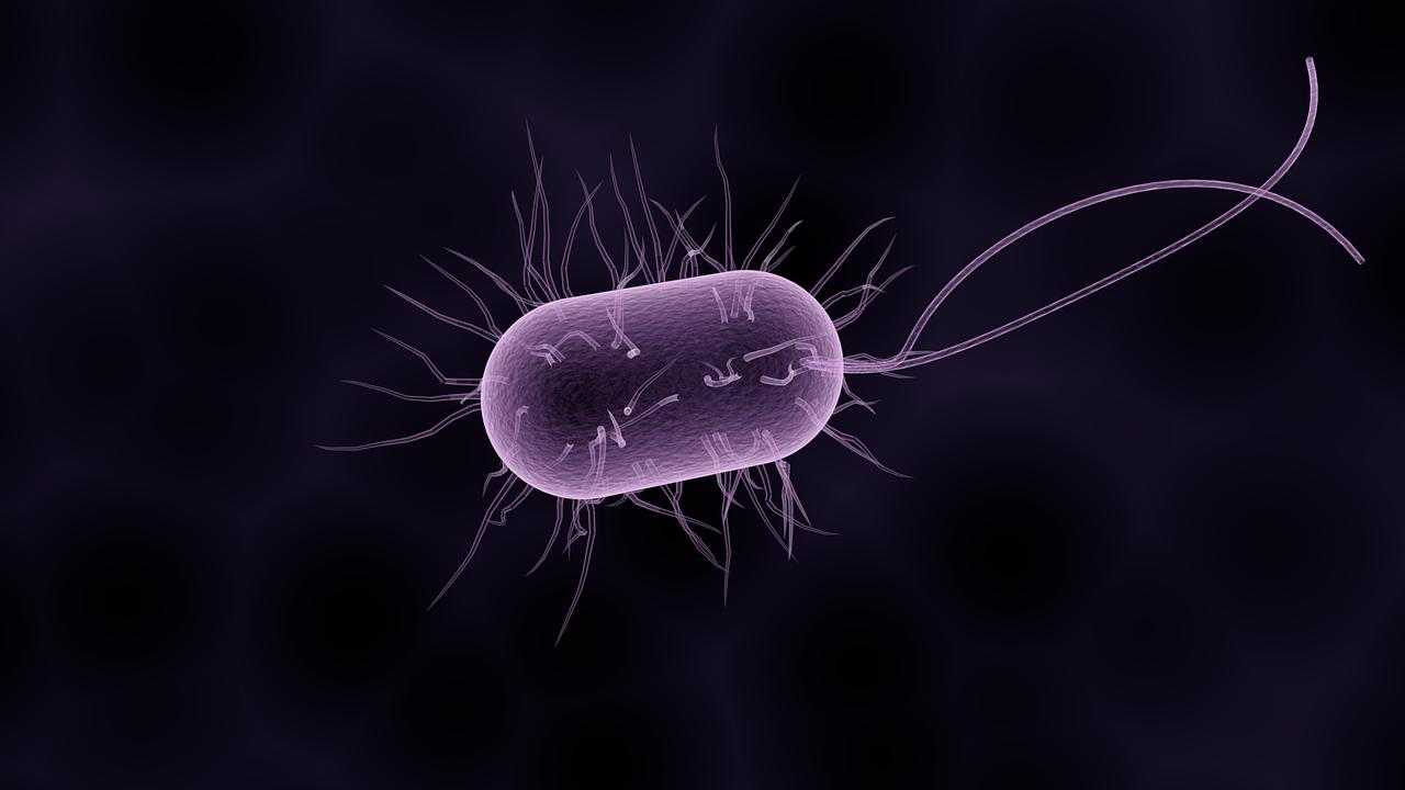 Boost immunity with BioSuperfood